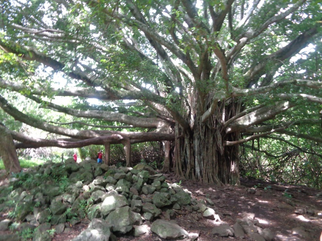 Bamboo Tree jpg